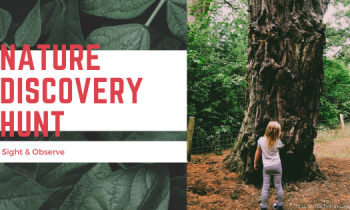 Nature Discovery Hunt: Sight & Observe